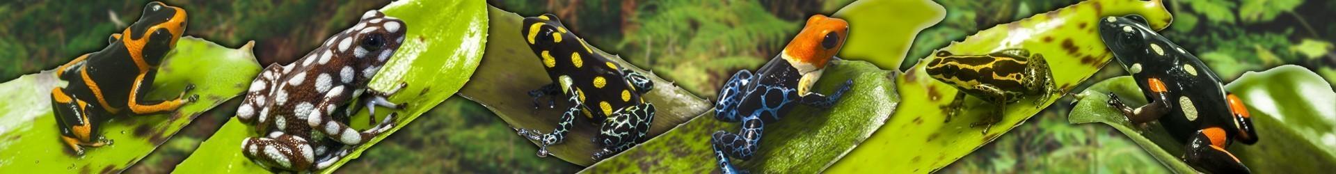 Geckos Diurnos
