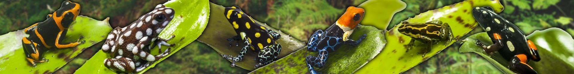Geckos Nueva Caledonia